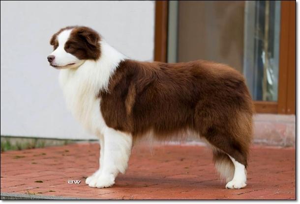 Példa kutya