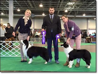 FeHoVa International Dog Show